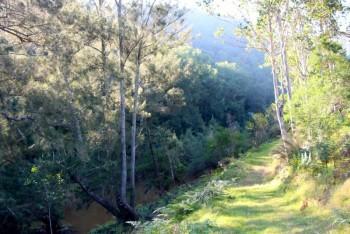Pepper Trees creek walk...