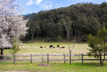 Dilly Dally at Wollombi - Wollombi - Hunter Valley
